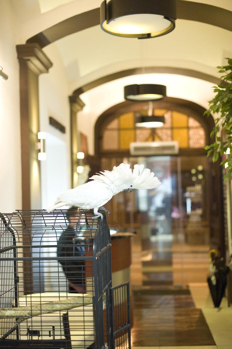 Maskotka Hoteliku Papuga Zuzka